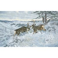 Battling Bucks - Mule Deer Art Prints