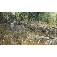Blow Down Buck - Mule Deer Art Prints