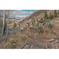 Busted Bachelors-Mule Deer Canvas by Michael Sieve
